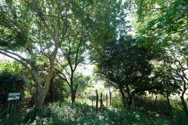 Ultimatum Tree